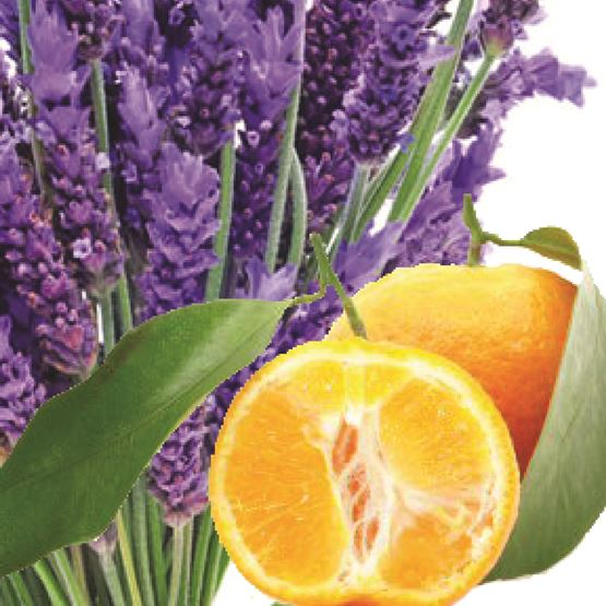 Lavender Bergamot (Essential Oil) by Maddison Avenue Candle Company