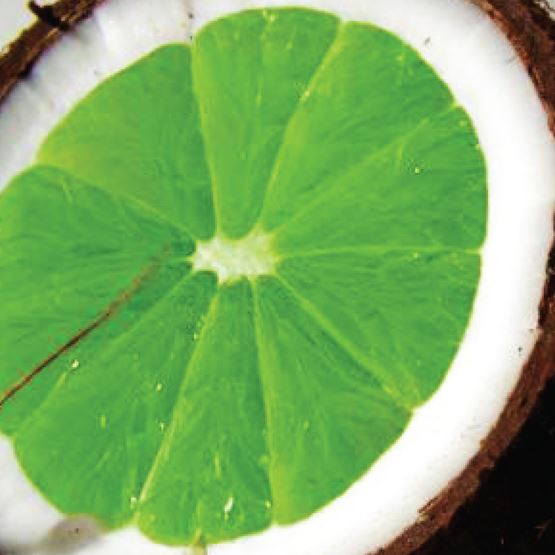 Coconut Lime Verbena by Maddison Avenue Candle Company