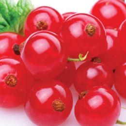 Red Currant by Scented Nest Candle Making Supply Company